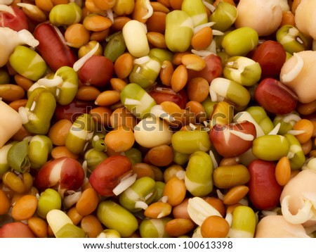 Mixed sprouted beans