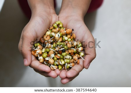 Mixed sprouts Seeds of green gram, flax seed in a child's hand. New life concept seed germination. condiment for cooking/ feed for domestic animals.Heart healthy oil/ fat free Protein rich food  - stock photo