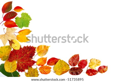 Mixture of red yellow and green autumn leaves over white background