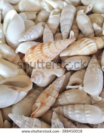 mixture of seashells background