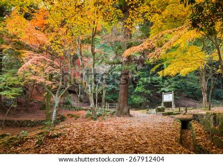 Miyajima in Hiroshima Japan - stock photo