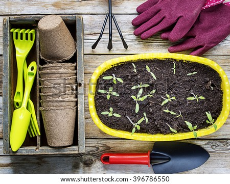 Mock up of gardening tools and seedling in soil surface  on a wood background - stock photo