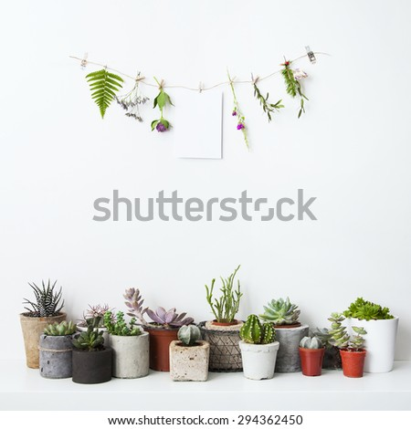 Mock up with hanging flowers and potted cactus and succulents. Hipster scandinavian rood design. - stock photo