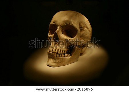 model of human skull - stock photo