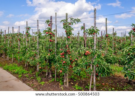 Espaliered Stock Images Royalty Free Images Vectors Shutterstock