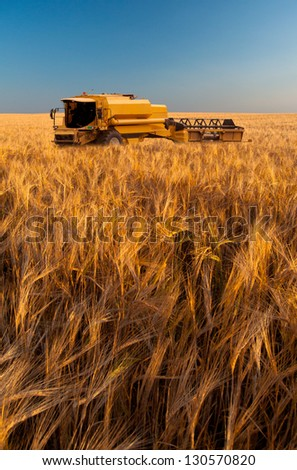 Modern combine harvesting wheat on sunny summer day. - stock photo
