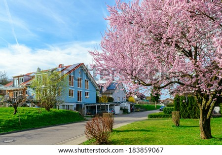 Modern Houses In A Green Suburb District With Blooming Tree In Spring
