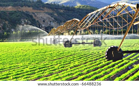 Modern irrigation system watering a farm field of carrots in late afternoon sunlight - stock photo
