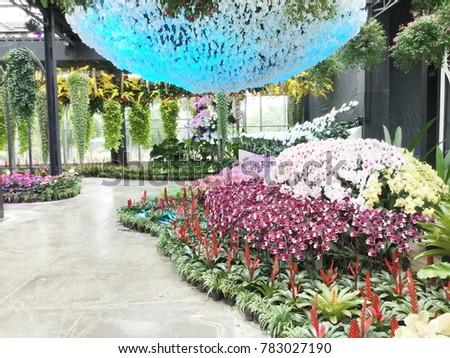 Modern Orchid Garden Design