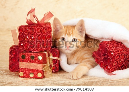Moggie kitten lying in Santa hat with red Christmas presents on beige background