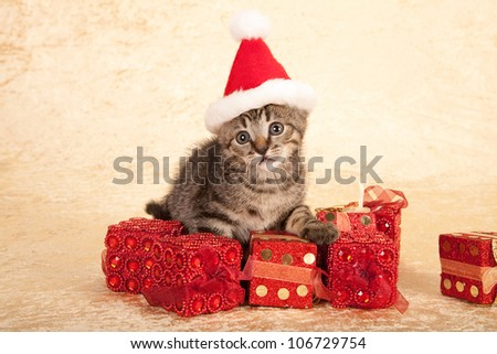 Moggie kitten wearing Santa cap hat with Christmas gifts presents on beige background - stock photo