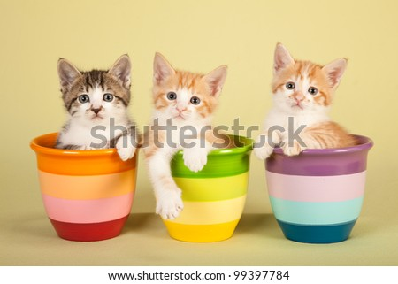 Moggie kittens sitting in colorful pots on green background - stock photo