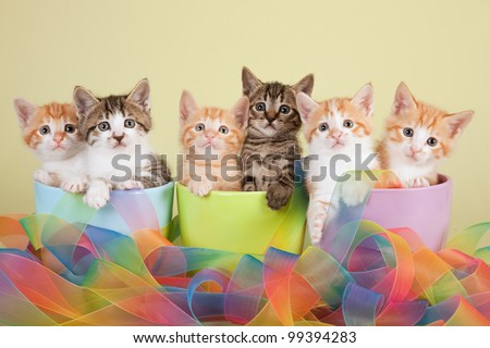 Moggie kittens sitting in pastel containers with tie-dye ribbon on green background