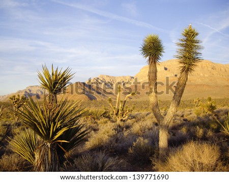Mohave desert flora glow in late light - stock photo