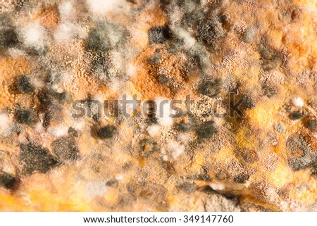mold - stock photo