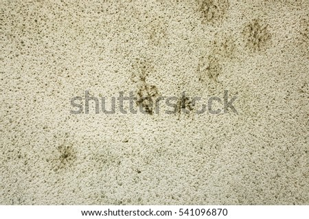 Mold Spores Stock Images, Royalty-Free Images & Vectors | Shutterstock