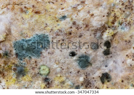Mold green and white spores on slices bread.  - stock photo