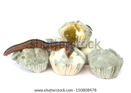 Mold growing on bread and millipede isolated on white background - stock photo