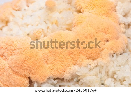 mold in rice - stock photo