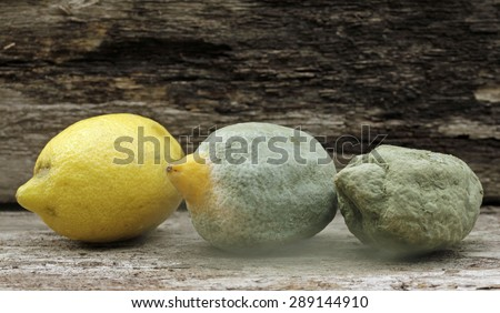 mold lemons - stock photo