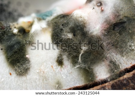Mold, macro view - stock photo