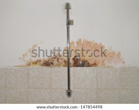 Mold on a wall in house  - stock photo