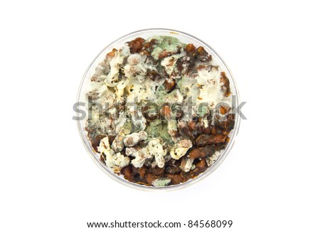 Mold On Old Food - stock photo