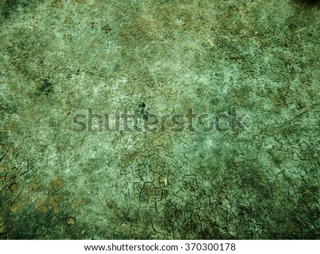 mold or mildew on a wooden board - stock photo