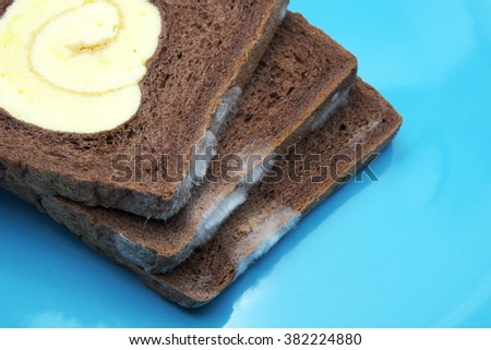 Moldy chocolate bread with vanilla roll at center on blue plate. Focus on mold. Space for texts.