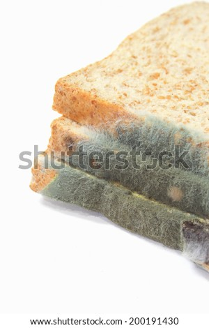 Moldy growing old bread  on white background - stock photo