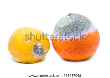 Moldy rotten orange and lemon fruit isolated on white
