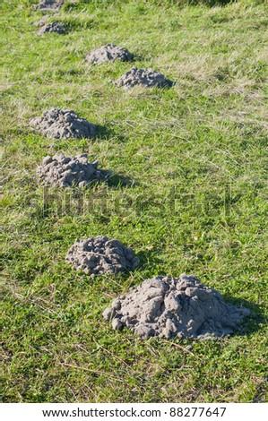 mole hills - stock photo