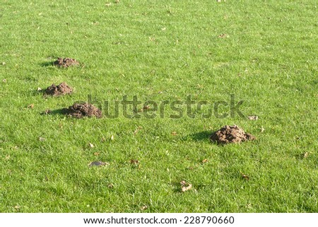 Mole mounds in the sport stadium in autumn background - stock photo
