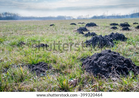 Mole mounds on spring grass in the middle of the garden / mole mounds - stock photo