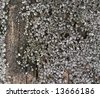 Mollusk attached on a fence - stock photo