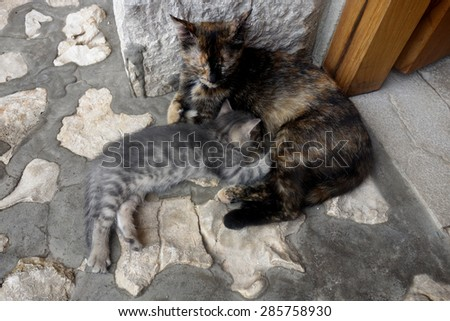 mom and baby cat - stock photo