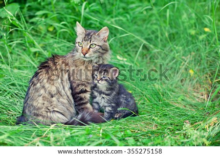 Mom cat with little kitten on the grass - stock photo