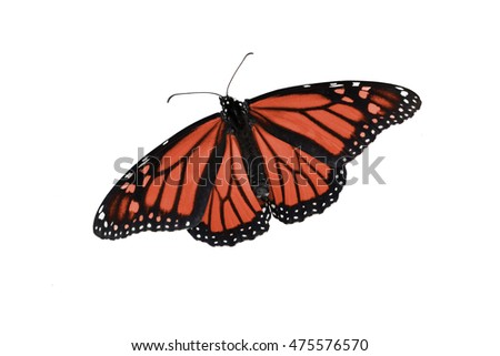 Monarch butterfly edited in a colorful red, on an isolated, pure white background. Can be rotated, flipped, use for a variety of ideas and concepts. Copy space, horizontal or vertical, flat layout