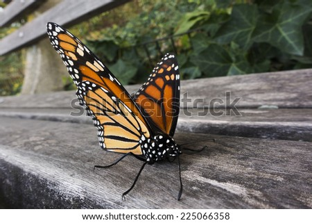 monarch butterfly on park bench - stock photo