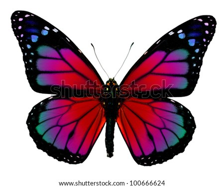 Monarch butterfly with redrawn bright fantasy colors - stock photo