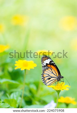 Monarch Butterfly with reed of grass and green environment background - stock photo