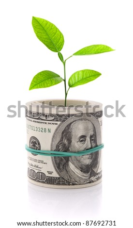 Money and plant isolated on white - stock photo