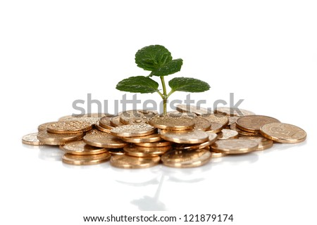 Money and plant isolated on white background?Money Concept - stock photo