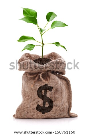 Money bag with dollar sign and money tree growing out of top isolated on white - stock photo