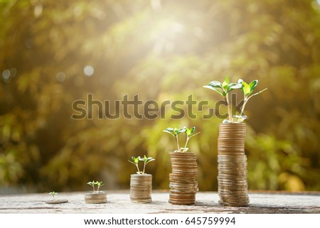 Money growing plant step with deposit coin. Bank and investment business concept.