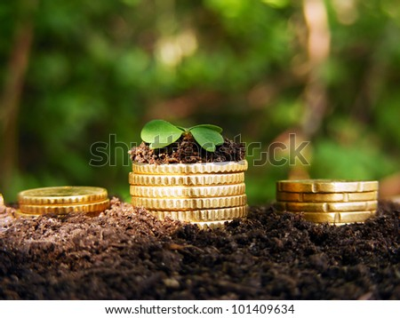 Money growth. Golden coins in soil with young plant. Financial metaphor. - stock photo