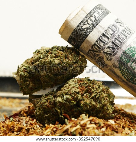 Money & Legal Pot or Weed from the Buds of the Cannabis or Marijuana Plants - stock photo