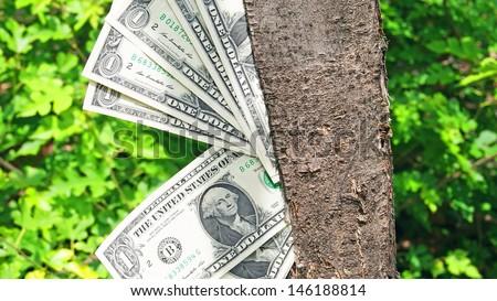 Money on a tree. - stock photo