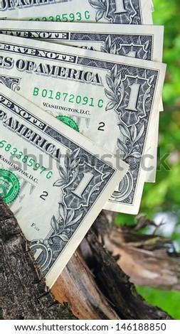 Money on a tree - stock photo