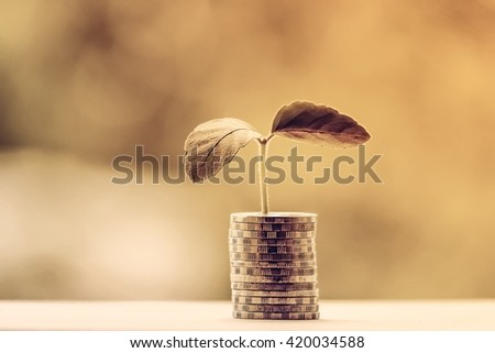 money tree and money concept and blur background